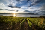 okanagan vineyard tours